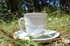 Spring time drink. Mug and a plate sitting on the gound Stock Images