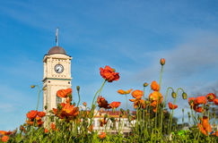 Spring Time Feilding. Spring flowers in the town of feilding by the town clock Stock Photo