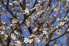 Spring Time Stock Photos