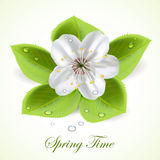 Spring time Royalty Free Stock Images