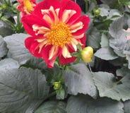 Spring time flower garden Stock Images