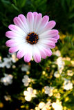 Spring Time Flowers Royalty Free Stock Photos