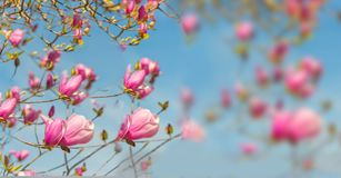Spring time  flowers nature space for your text , background Royalty Free Stock Images