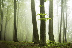 Spring time in fogy forest Stock Photos