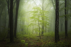 Spring time in fogy forest Stock Images