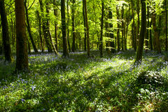 Spring time in the forest stock image