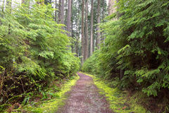 Moss Path. Spring Time Forest Path Overtaken By Moss Royalty Free Stock Photo