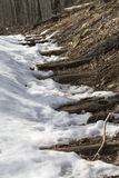 Snow covers a hiking trail in Shenandoah National Park, Virginia Royalty Free Stock Photography