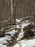 Snow covers a hiking trail in Shenandoah National Park, Virginia Stock Photo