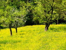 Spring time (1) fruit tree and flower meadow Royalty Free Stock Image
