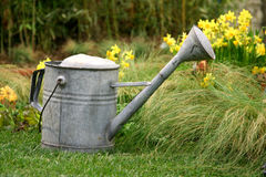 Spring time gardening. Details with green grass perennials and narcissus Stock Image
