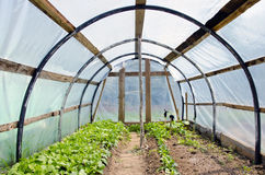Spring time greenhouse with radish sprouts Stock Images