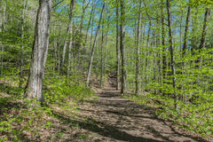 Spring Time Hike In The Adirondacks. Hiking the trail leading to Sleeping Beauty Mountain in the Adirondacks last spring Royalty Free Stock Photos