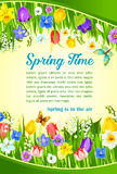 Spring time holiday flowers greeting vector poster. Spring Time greetings and blooming flowers field design. Vector blooming crocuses, spring tulip blossoms Stock Photography