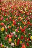 Spring time in Holland Stock Photos