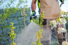 Plants Health Care. Spring Time Insecticide Garden Trees. Plants Health Care royalty free stock photo