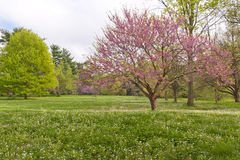 Spring time in Kentucky Royalty Free Stock Photography