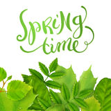 Spring time with leaves Royalty Free Stock Image