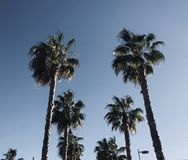 Spring time in malaga spain palms and clouds. Spring time in malaga spain, palms and sky. Sun coast Royalty Free Stock Photo