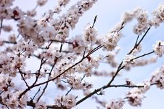 Spring time is nature at its best. I need you like a blossom needs rain, like the winter ground needs spring-to soothe my parched soul Stock Photography