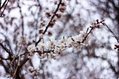 Spring time is nature at its best. I need you like a blossom needs rain, like the winter ground needs spring-to soothe my parched soul Stock Image