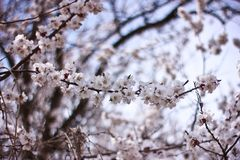 Spring time is nature at its best. I need you like a blossom needs rain, like the winter ground needs spring-to soothe my parched soul Stock Photo