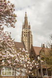 Spring time - Our Lady Church, Brugge, Belgium. Spring time blossom tree. Our Lady Church - Brugge, Belgium Stock Image