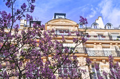 Spring Time in Paris. A royal paulownia tree in bloom in the springtime in Paris Royalty Free Stock Photography