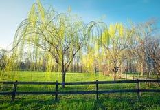 Spring time in park Stock Image