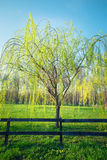 Spring time in park Royalty Free Stock Photography