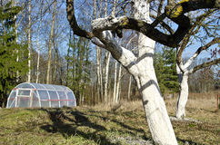 Spring time plastic greenhouse and whitened apple tree trunks in farm Stock Images