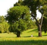 Spring time San Antonio Park Stock Image