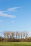Spring time scene with trees and a blue sky Royalty Free Stock Image