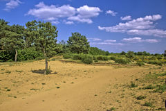 Spring time scenery landscape in Croatian desert Royalty Free Stock Photography