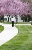 Spring time stroll in park. Spring time stroll on a sidewalk with cherry blossoms and a person walking on the footpath in the distance Royalty Free Stock Photo