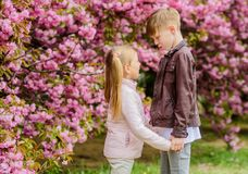 Spring time to fall in love. Kids in love pink cherry blossom. Love is in the air. Couple adorable lovely kids walk. Sakura garden. Tender love feelings. Little stock photography
