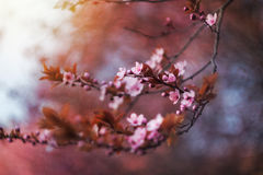 Spring. Time, tree in bloom Royalty Free Stock Photos