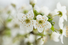 Spring time flowers Stock Image