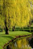 Spring Time Trees Royalty Free Stock Image