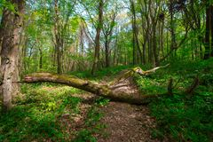 Spring Time For Turkey, April 2019, Belgrad Forest, Bright Day stock photos
