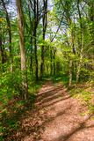 Spring Time For Turkey, April 2019, Belgrad Forest, Bright Day stock photography
