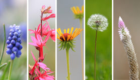 Spring time wild flowers Stock Image