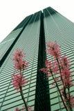 Spring in Tokyo Royalty Free Stock Image