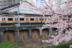 Spring in Tokyo Royalty Free Stock Photography