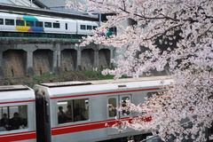Spring in Tokyo Royalty Free Stock Images