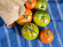 Spring tomatoes on table cloth. Italian tomatoes in a paper bag on blue table cloth Stock Photos