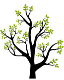 Spring tree. Illustration, element for design, card or emblem Stock Photography