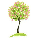 Spring tree. Spring blossom tree over white background stock illustration