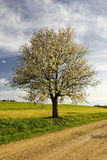 Spring tree Stock Image