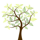Spring tree. With beautiful leaves Royalty Free Stock Photo